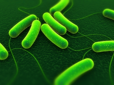 Bacteria in Drinking Water   E. Coli   Coliforms   St ...