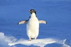 walking-on-ice-2-123240-edited.jpg