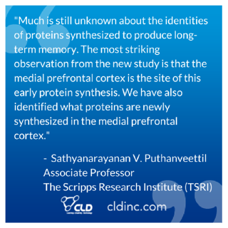 "Much is still unknown about the identities of proteins synthesized to produce long-term memory. The most striking observation from the new study is that the medial prefrontal cortex is the site of this early protein synthesis. We have also identified what proteins are newly synthesized in the medial prefrontal cortex."" - The Scripps Research Institute (TSRI) Associate Professor Sathyanarayanan V. Puthanveettil"
