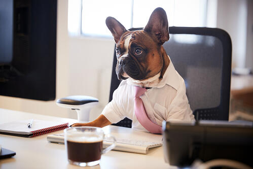 Pets in the Office: The Pros and Cons