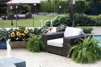 Tropic Escape Hibiscus from Costa Farms illustrates outdoor living trend in garden marketing.