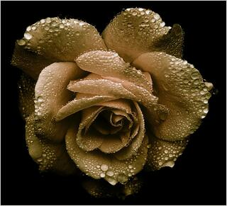 Golden Age-1.jpg