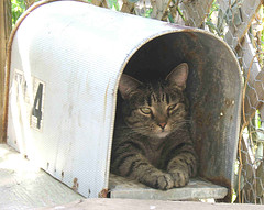 This is a photo of cat in a mailbox.