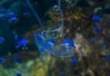 eel-like-transparent=robot.jpg