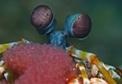 underwater-eyes.jpg