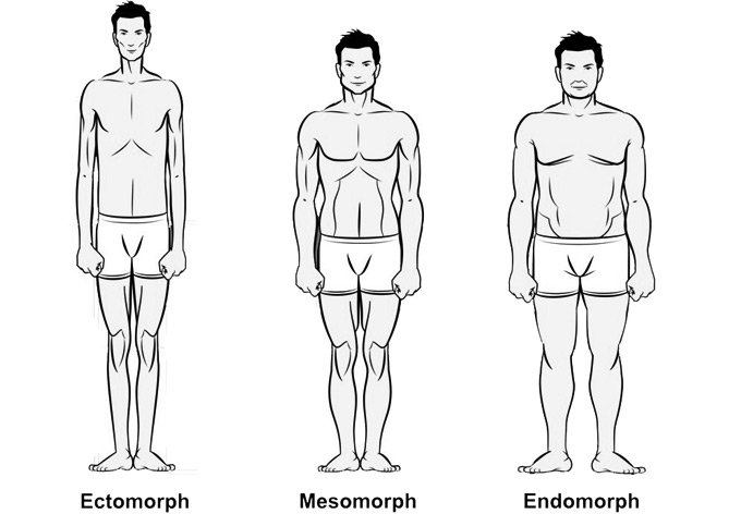 Body Type Also Can Predict Fiber Ectomorphs Generally Are Slow Twitch Mesomorphs Fast And Endomorphs Somewhere In The Middle