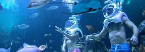 Activities in Cancun? A sea trek with Delphinus Trek