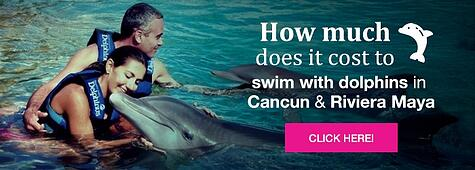How much does it cost to swim with dolphins in Cancun