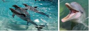 Bienestar de delfines y otros cetáceos en zoológicos y acuarios