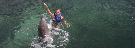 best-experiences-swim-with-dolphins.png