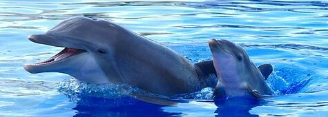 delphinus-breeding-maternity.jpg