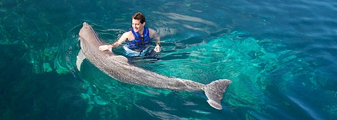swimming-with-dolphins-is-good.png