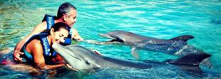 How much does it cost to swim with dolphins?