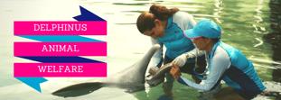 ¿Sabías que Delphinus tiene un centro de bienestar animal?