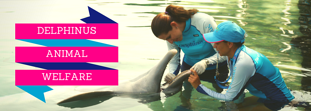 Did you know that Delphinus has a Dolphin welfare center?