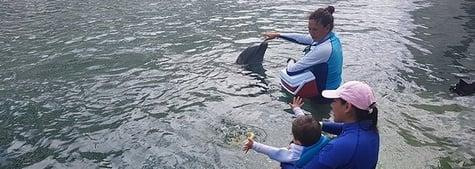 autismo-terapia-delfines