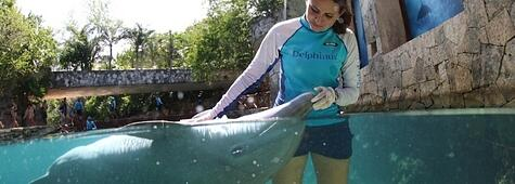 estudio-internacional-de-bienestar-animal-de-delfines-en-cautiverio-283007-edited-682503-edited.jpg