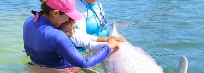 dolphin-therapy.jpg