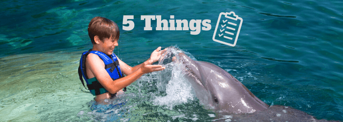 Delphinus 5 things before swim with dolphins