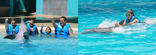 Ride or Splash? Know the differences and swim with dolphins