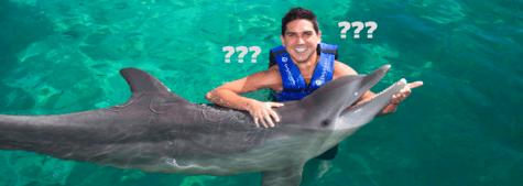 Delphinus todo sobre nado con delfines Xcaret