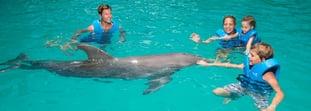 ¿Cuánto cuesta nadar con delfines en Cancún?
