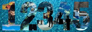 Los 5 mejores acuarios en México: realidad aumentada, nado con delfines y más