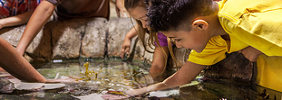 Top 5 best aquariums in Mexico: from AR to swimming with dolphins!