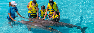 All you have to know before you swim with dolphins in Cancun
