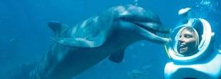 Sea Trek: close encounter with dolphins
