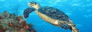 Conoce las 5 playas más hermosas de México