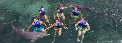 nado-con-delfines-cancun-punta-cancun.png