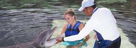 tips-para-nadar-con-delfines.png