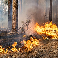 Controlled Forest Fire.jpg