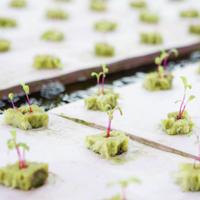 aquaponics-seed-starter.jpg