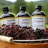 Elderberries the ultimate cash crop
