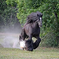 Aunique Horse Ranch