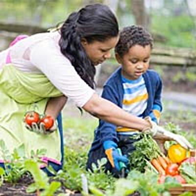 Mother and Son picking vegetables in the garden