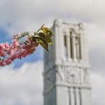 Spring Belltower newsletter