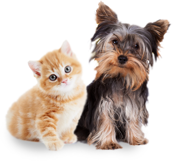 Janry Pet Resort Boarding for Dogs Cats and birds