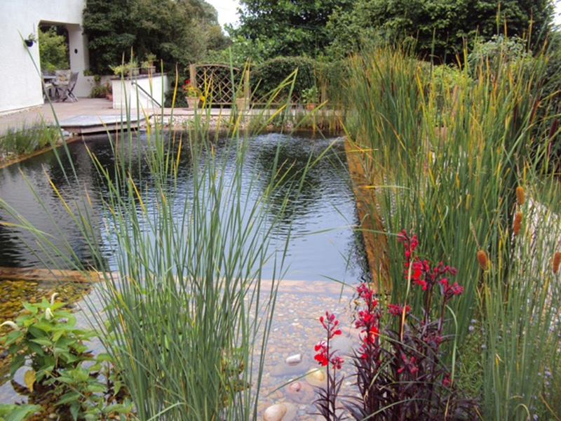 Natural swimming pools are 100% chemical-free and can be used throughout the year. They also benefit your garden ecology as any plants you put in it will offer a variety of habitats for plants and animals. Photograph: Clear Water Revival