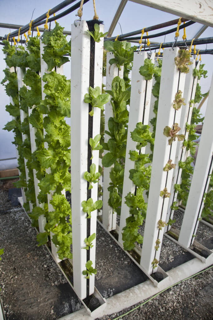 Recirculating And Flow To Waste Hydroponics