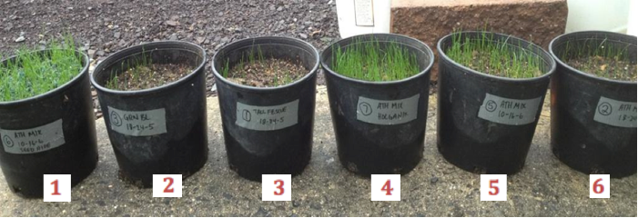 Holganix Case Studies: Put Holganix to the Test with Seed Germination!