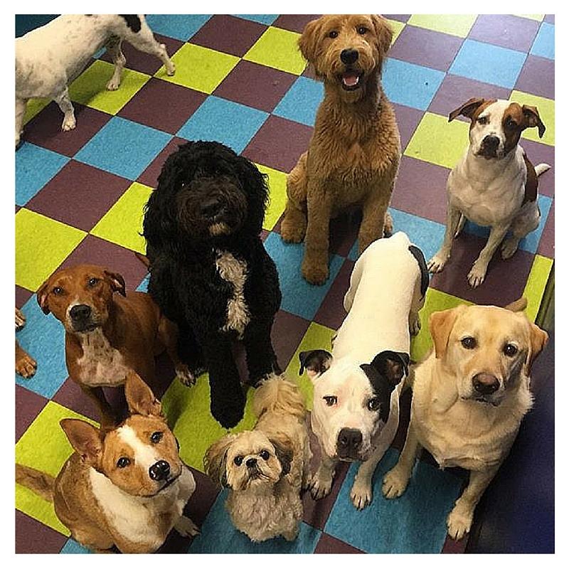 dogparty2.jpg