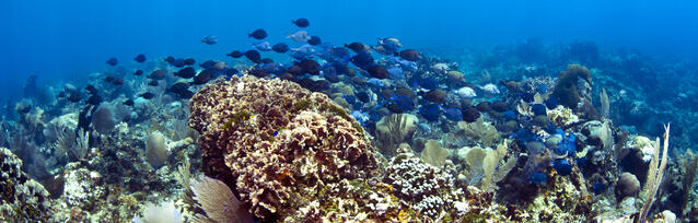 Coral_and_Fish.jpg