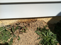 Fire ants Raleigh NC, Fire ant getting in home