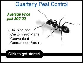 Pest Control Fayetteville  Pest Control Fayetteville NC
