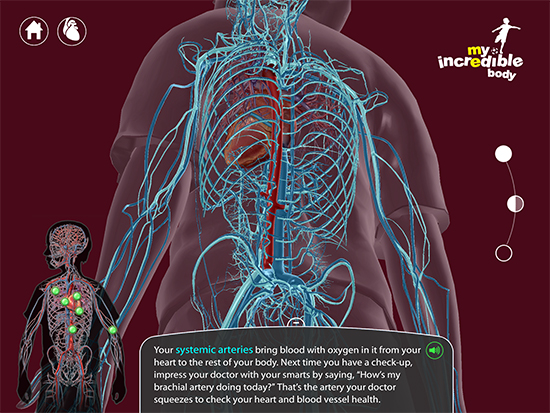 My-Incredible-Body-Systemic-Arteries-Veins-Vasculature-Kids-Anatomy