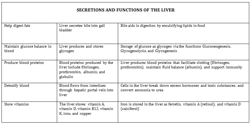 Liver-Function-Digestive-Anatomy