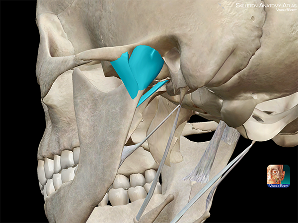 Temporomandibular-joint-disorder-TMJ-joint-capsule-sphenomandibular-ligament